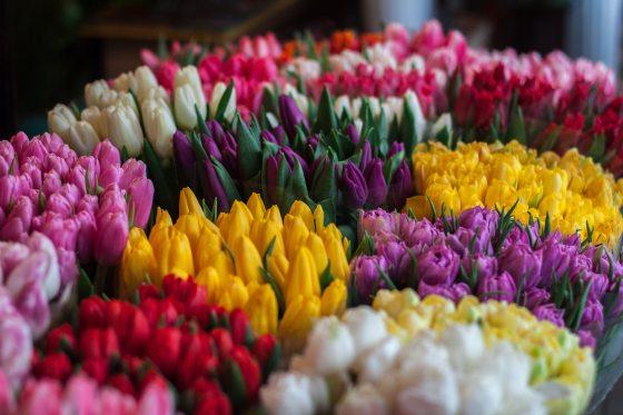blossom-bouquet-bouquets-250716