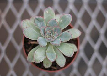 blur-botanical-close-up-1034471